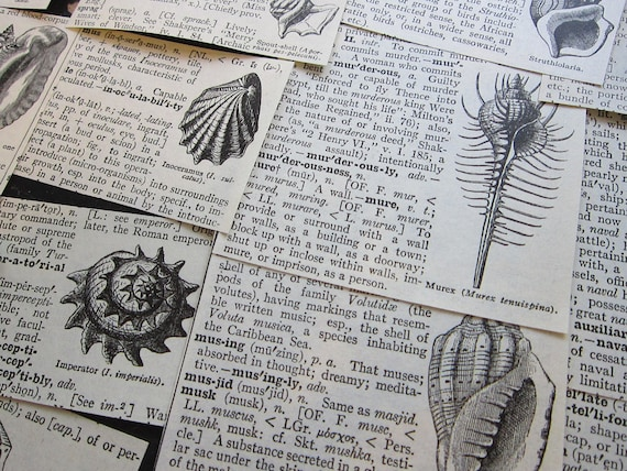 37 antique dictionary illustrations - SEASHELLS - collage supplies