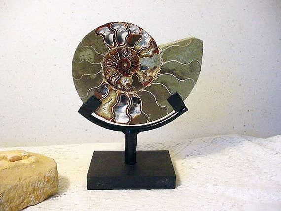 Sliced Ammonite Fossil w/ Metal Stand  Ancient Nautilas from Madagascar (11tu313A)