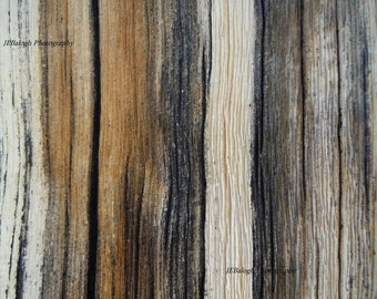 "Nature Photography, Macro view of Old Tree, ""Timeline"", Bark, Texture, Weathered, Earthtones, Fine Art Print"