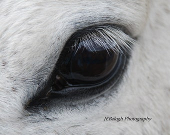 "Horse Photography, Animal and Macro Photography , Equestrian Art, Close up of Black Eye on White Horse, ""Every Lash"", Fine Art Print"