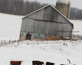 "Landscape Photography, Farm Old Barn Silo Fences Cattle Cows, Winter Snow, Colorful Barn, Country Living, ""Until the Cows Come Home"",  8x12"""