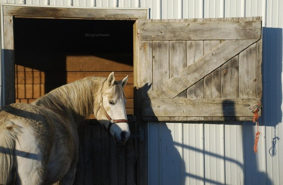"""Horse Photography, Horse photo, White Mare waiting at the barn, Equestrian Art, """"Waiting Katie"""", 5x7"""" Fine Art Print"""