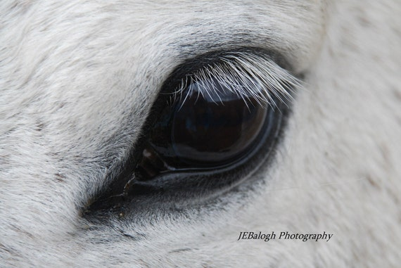 animal eye black and white - photo #19