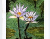 Blank Note Card Stationery White Water Lily  Garden with envelopes-set of 10