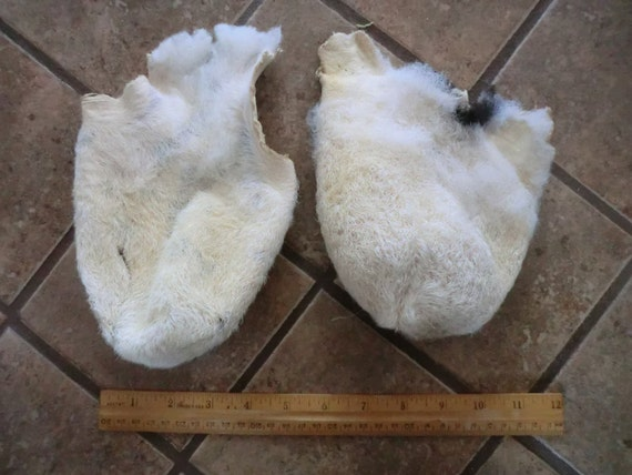 Two Jacob Sheep Tanned Scortums READY 4 CRAFTING