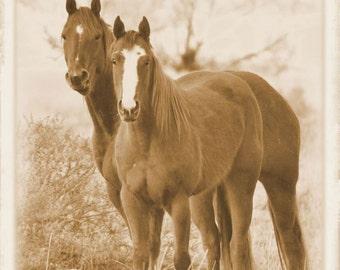 Albumen Horses Fine Art Photo