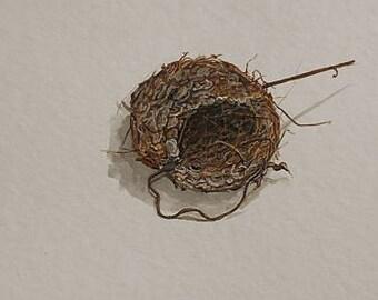 Hummingbird Nest Print