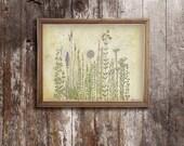 """Prairie Wildflowers - Spring Wild Flowers Print - Archival 8""""x10"""", 5""""x7"""", 9""""x12"""" or 11""""x14"""""""