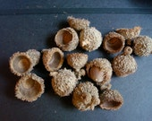 25 over cup shaggy  natural acorn caps doll hats craft flat eco friendly doll birds nest