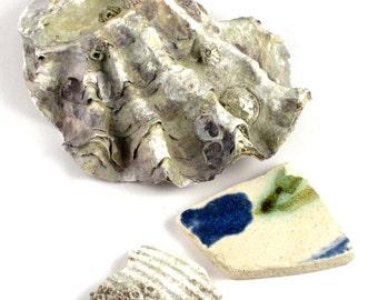 Oyster, Shell, Shard Original Photograph
