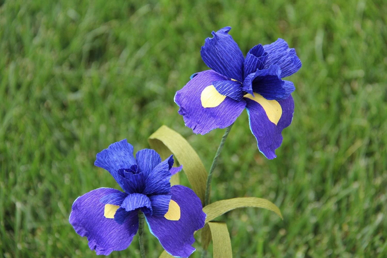 Blue Iris Flowers set of 2 crepe paper flowers