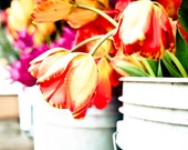 Seattle Pike Place Market - Market Tulips - 8x10 Fine Art Print  photograph or orange and red tulips in a white bucket