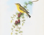 CLEARANCE Vintage Book Plate by John Gould of Warbler