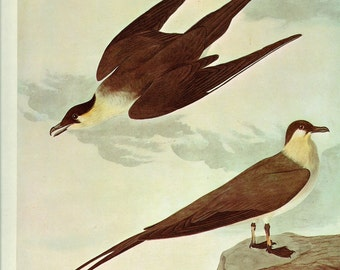 CLEARANCE Vintage Audubon Booplate from 1966 Volume