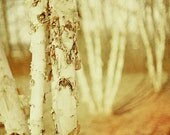 Whispers And Paper - Fine Art Photograph 5x7 - BOGO SALE