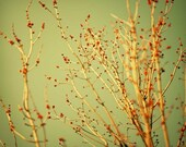 Almost - Fine Art Photography 5x5 - BOGO Sale
