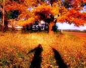 Orange Leaves and Shadows
