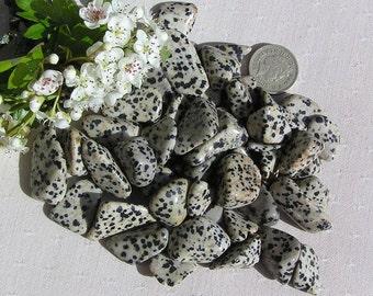 12 Dalmatian Jasper Crystal Tumblestones, crystal collection, chakra crystals, reiki, jasper tumblestones, base chakra, meditation stone