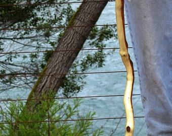 Manzanita Walking Stick (16)