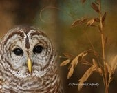 Who's who Barred Owl 8 x 10 Fine Art Photographic print