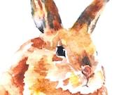 Bunny Rabbit Watercolor Note Card Set
