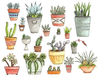 "Potted Succulents 8.5x11"" Print"