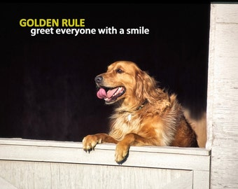 Dog Photography, Golden Retriever, Smile, Golden Rule, Joy, Happy, Greeting, Barn, Wood, Quote