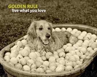 Dog Photography, Golden Retriever, Lesson, Golden Rule, Tennis Ball, Inspiration, Joy, Happy, Passion