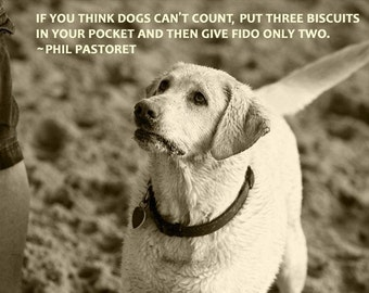 Dog photography, Yellow Lab, Old Dog, Retriever, Quote, Math, Biscuit, Bone, Treat, Begging, Adorable, Gaze
