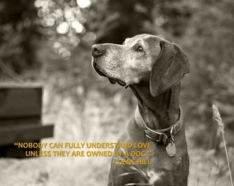 Dog Photograph, Vizsla, Senior Dog, Field, Poignant, Sunlight, Quote Print