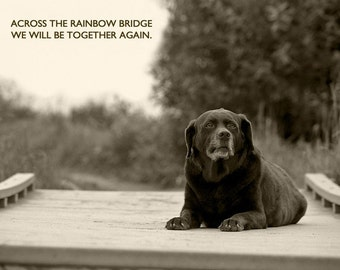 Dog Photography, Senior Dog, Chocolate Lab, Rainbow Bridge, Pet Loss, Bridge, Heaven, Condolence