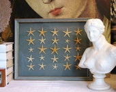Starfish Specimen Shadow Box OOAK