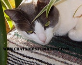 Peaceful Daisy Love Cat Digital Photography 8 by 10 by Richard Bruness at Chat Noir Studio