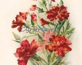 vintage flower print - PINK ROSES - Victorian botanical artwork from the 1890s
