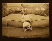 It's Ruff Getting Older Folded French Bulldog Birthday Card with envelope