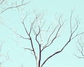 bare tree branches nature photography tiffany blue decor minimalist 8x10 tree print robin egg blue charcoal grey black