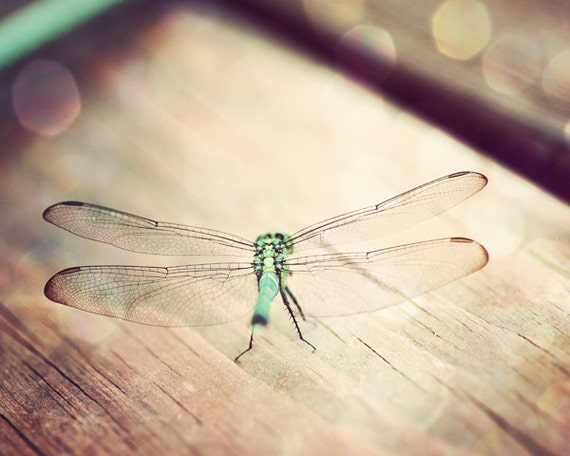 dragonfly prints, nature wall art, dragonfly bedroom art, rustic wall art photos, nature photography, teal and brown art, dragonfly art