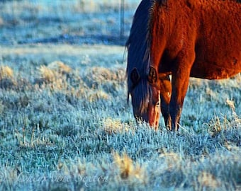 Horse Art - Blue Frosty Morn Horse rich colors fine art giclee fine art print 8x10