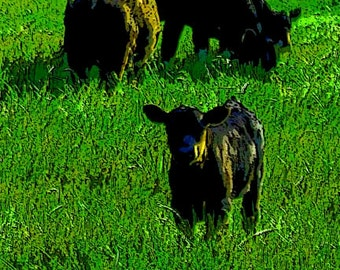 Black Calf w Cows in Mint Green Grass Man Cave French Country Art photography 8x12 poster giclee Country Home Decor Farmhouse Wall Art Print