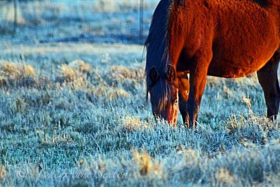 Horse Art - Blue Frosty Morn Horse rich colors fine art giclee fine art print 8x10