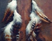 Native Wings Long Feather Earrings