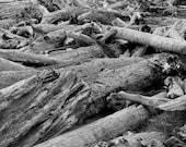 "Driftwood on a Rainy Beach in Washington, Black and White (8"" x 10"" photographic print)"