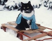 CLEARANCE  Black & white Tuxedo CAT n SNOW on sled  5x5 color  photograph
