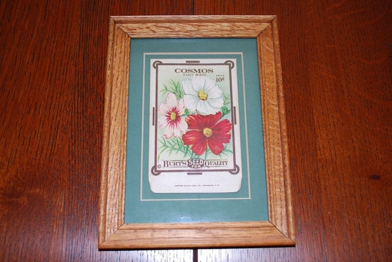 "Antique 1915 ""Cosmos"" Burt's Seed Packet Stone Lithograph"