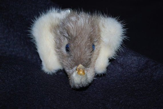 Antique Natural Fur Elephant Brooch Clip with Blue Glass Eyes - Sweater Clip - Coat Clip - Taxidermy Hand Crafted 1940's