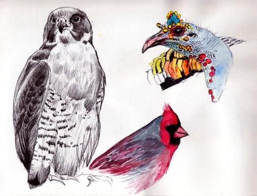 Peregrine Falcon Sketch Peregrine Falcon Drawing