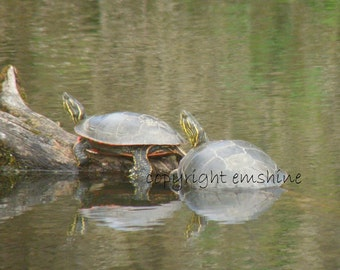 Western Painted Turtles greeting card. Print available. Buy 4 of this and get one free.