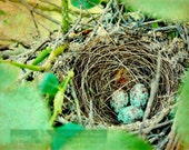 Beautiful Little Bird's Nest ~ photo illustration print ~ Multiple sizes