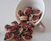 Tiny ladybugs -6 dozen