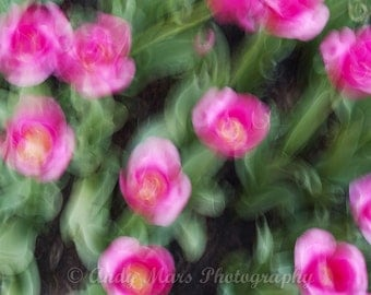 Pink Flowers in Motion